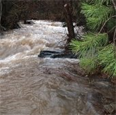 river flowing through wooded area