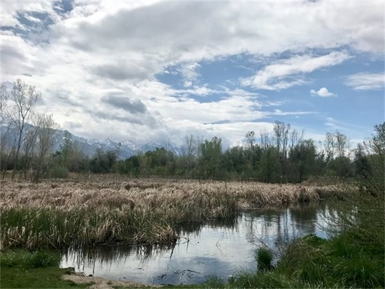 wetland area of Big Cottonwood Regional Park
