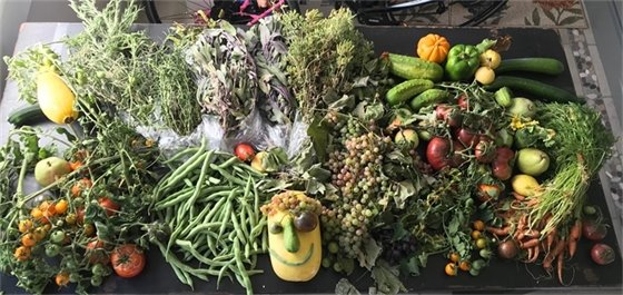 garden vegetable spread on a table