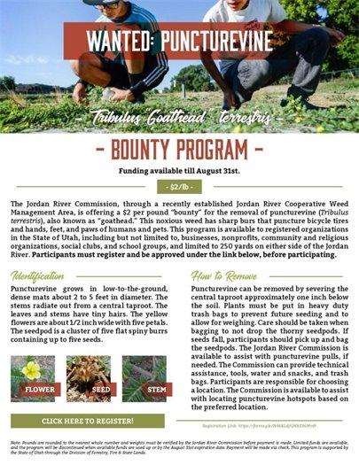 Puncturevine Bounty Program
